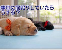 食事中に寝る犬