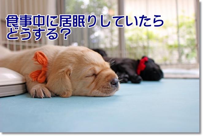 食事中に居眠りしていたら、どうする?