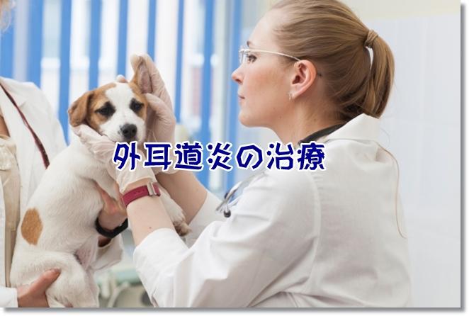 外耳道炎の治療